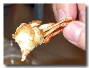 プーニム・トーッ・クロップ ソフトシェルクラブのカリカリ揚げ 蟹の断面