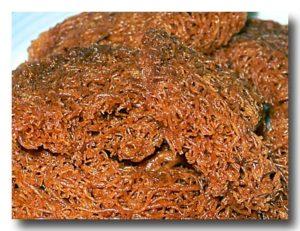 カラス カラス karas-karas 米の揚げクッキー