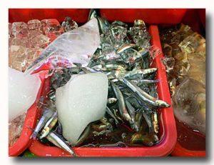 丁香魚 キビナゴ