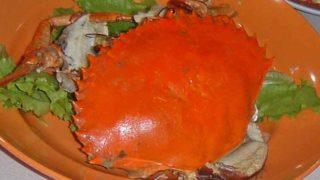 コールドクラブ cold crab [凍蚧:冷蟹]