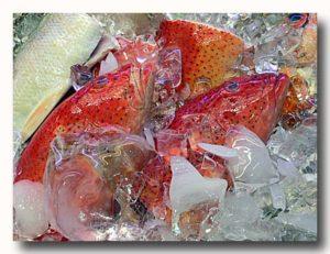 石斑魚 ハタ