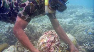 シャコ貝を捕獲する男