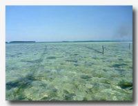 紅藻類の養殖場 海の中にロープを張って結ぶ